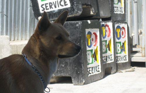 Max il guardiano